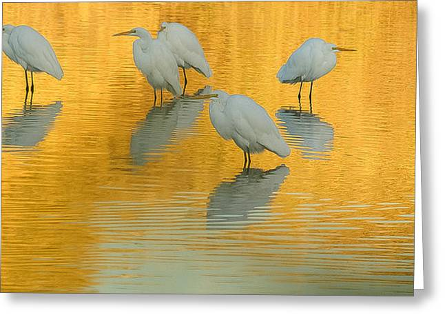 Tam Ryan Greeting Cards - On Golden Pond 3 Greeting Card by Tam Ryan