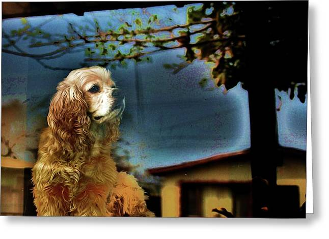 Doggie Photographs Greeting Cards - On Guard Greeting Card by Helen Carson