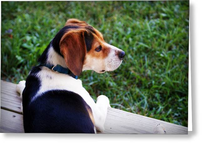 Guard Dog Greeting Cards - On High Alert Greeting Card by Cricket Hackmann