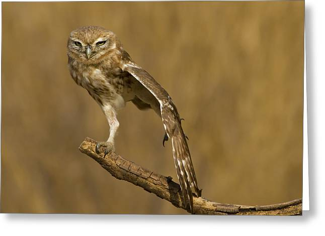 Little Birds Greeting Cards - On One Feet Greeting Card by Amnon Eichelberg