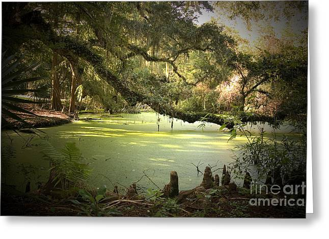 Cajun Greeting Cards - On Swamps Edge Greeting Card by Scott Pellegrin