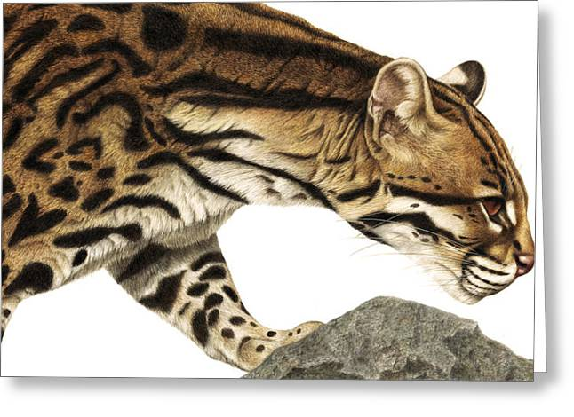 """wild Cat"" Greeting Cards - On Target Ocelot Greeting Card by Pat Erickson"