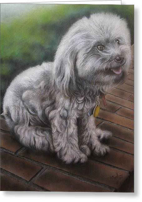 Custom Pet Drawing Greeting Cards - On the Bricks Greeting Card by Jonathan Anderson