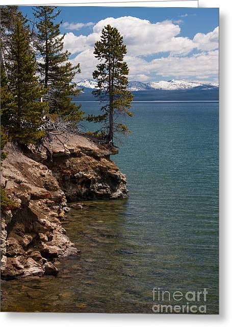Whitebark Pines Greeting Cards - On The Edge Greeting Card by Katie LaSalle-Lowery