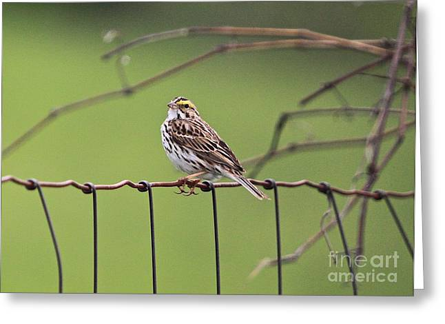 Great Birds Mixed Media Greeting Cards - On the fence Greeting Card by Robert Pearson