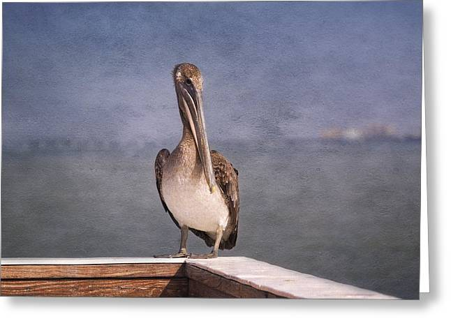 Seabirds Greeting Cards - On The Pier - Fort Myers Beach Greeting Card by Kim Hojnacki