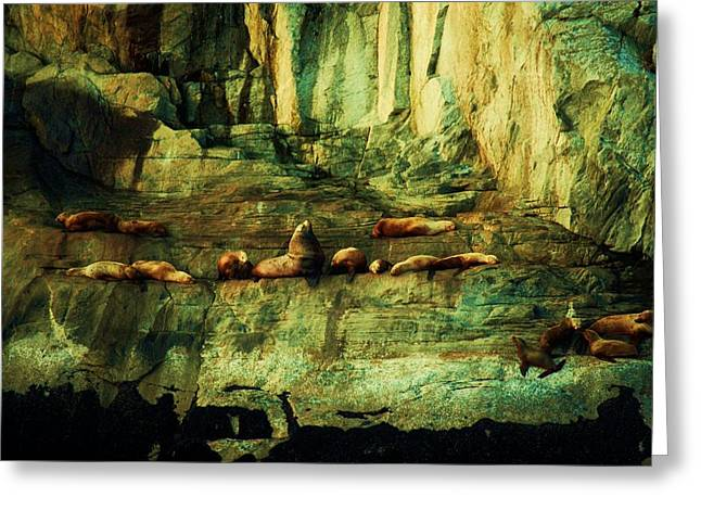 Sea Lions Greeting Cards - On the Rocks Greeting Card by Helen Carson