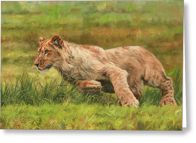 Lions Greeting Cards - On the Run Greeting Card by David Stribbling