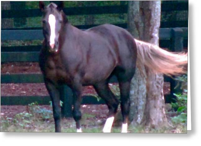 Best Sellers -  - Pastureland Greeting Cards - On The Run Greeting Card by Debra     Vatalaro