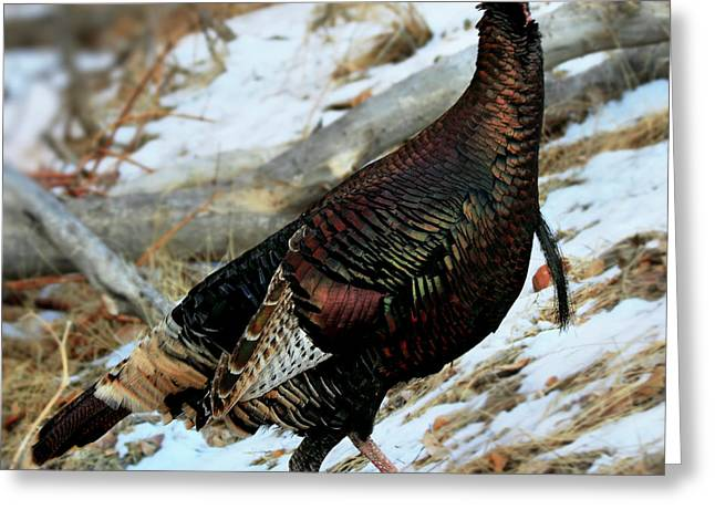 Hunting Bird Greeting Cards - On the Run Greeting Card by William Gillam