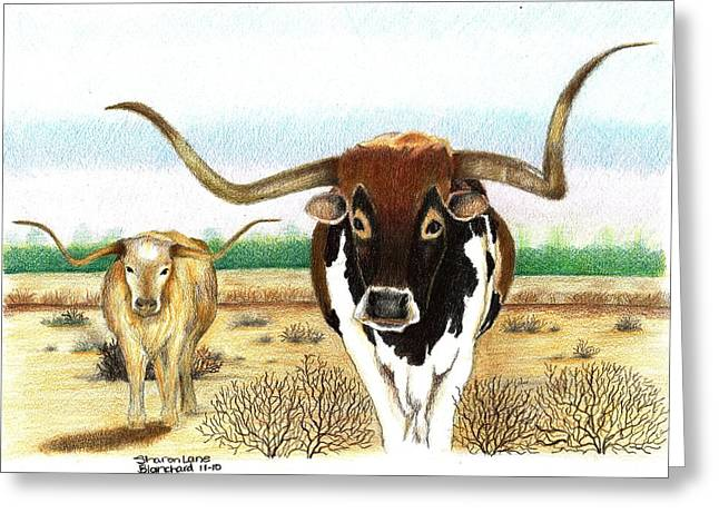 Steer Drawings Greeting Cards - On the trail Greeting Card by Sharon Blanchard