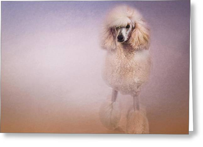 Artistic Photography Greeting Cards - On The Way To The Salon Greeting Card by Jai Johnson