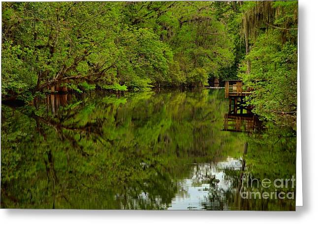Manatee Springs Greeting Cards - On The Way To The Suwannee River Greeting Card by Adam Jewell