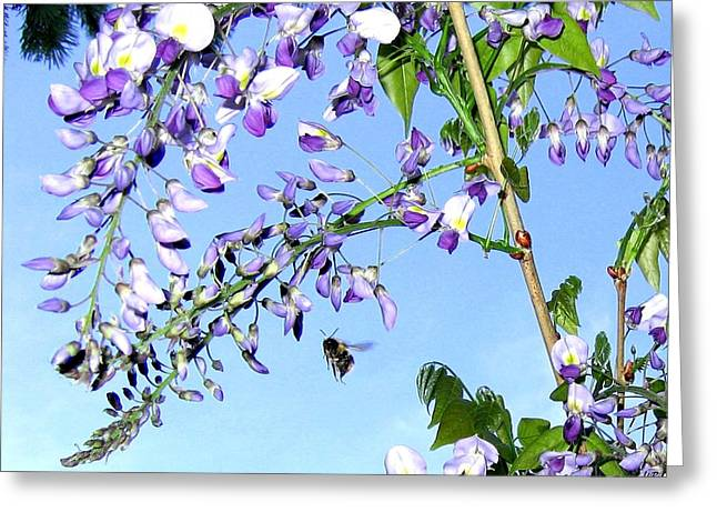 Honeybee Greeting Cards - On The Wing Greeting Card by Will Borden