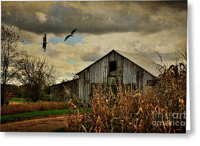 Barn Digital Greeting Cards - On The Wings Of Change Greeting Card by Lois Bryan