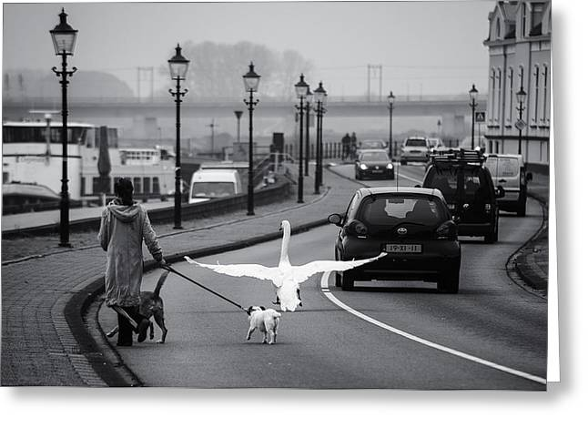 Swans... Greeting Cards - On The Wrong Side Of The Road Greeting Card by Gerard Jonkman