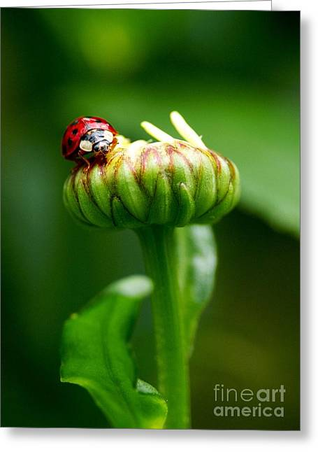 Daisy Bud Greeting Cards - On Top of My World Greeting Card by Sharon  Talson