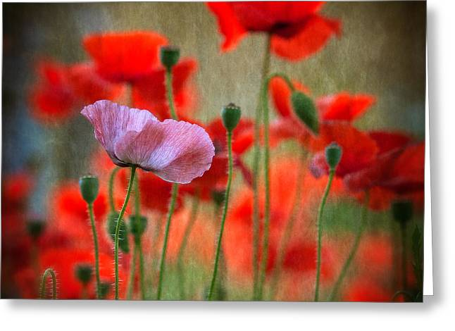 One Photographs Greeting Cards - One Greeting Card by Anne Worner
