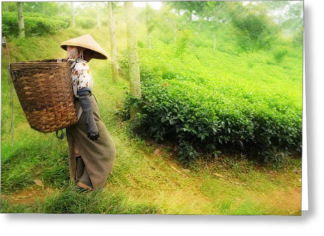 Image Pyrography Greeting Cards - One Day In Tea Plantation  Greeting Card by Charuhas Images