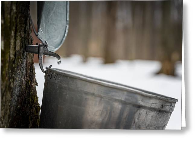 Maple Syrup Greeting Cards - One drop at a time Greeting Card by Chris Bordeleau