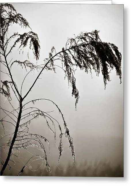 Silhouette Of Tree Greeting Cards - One Foggy Morning Greeting Card by Carolyn Marshall