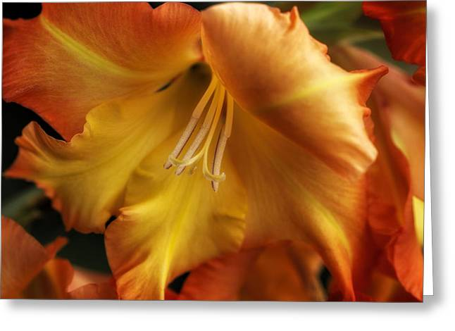 Gladiole Greeting Cards - One Good Reason Greeting Card by Vronja Photon
