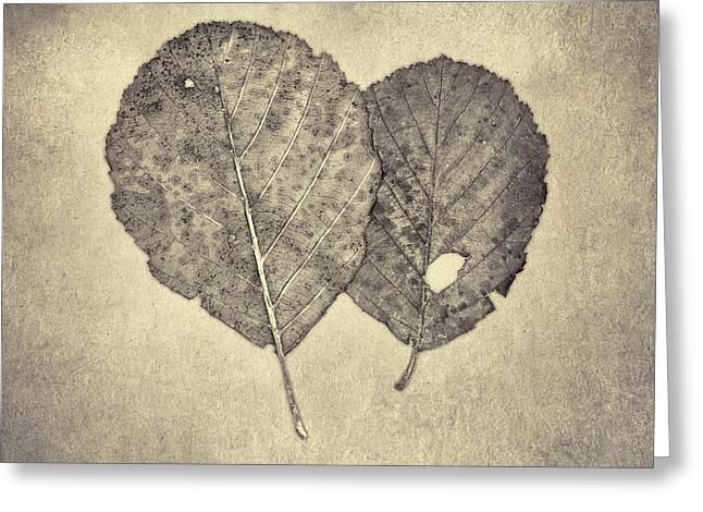 One Leaf Two Leaf Greeting Card by Scott Norris