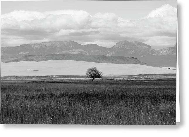 One Lone Tree Montana Black And White  Greeting Card by John McGraw