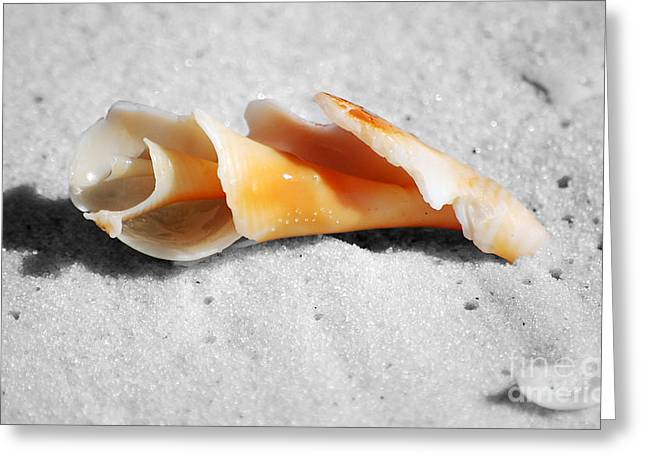 Puerto Rico Greeting Cards - One Orange Spiral Sea Shell Macro Close Crop on Fine Wet Sand Greeting Card by Shawn O