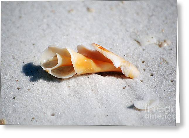 Puerto Rico Photographs Greeting Cards - One Orange Spiral Sea Shell Macro on Fine Wet Sand Greeting Card by Shawn O