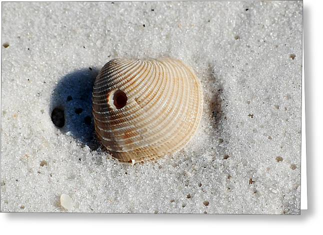 Puerto Rico Greeting Cards - One Orange Striped Sea Shell with Hole Macro on Fine Wet Sand Square Format Greeting Card by Shawn O