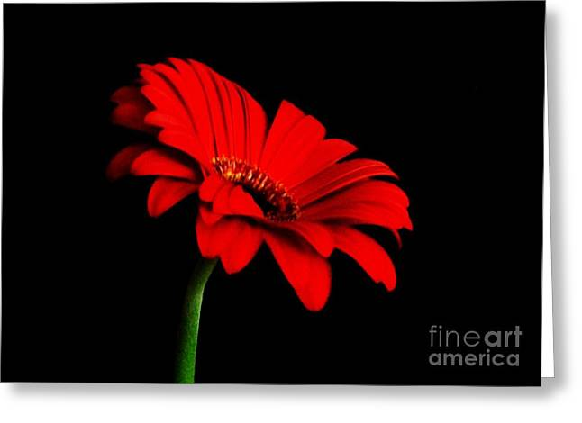 One Red Daisy Greeting Card by Marsha Heiken