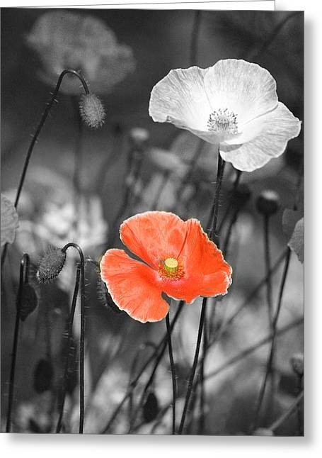Delicate Mixed Media Greeting Cards - One Red Poppy Greeting Card by Bonnie Bruno