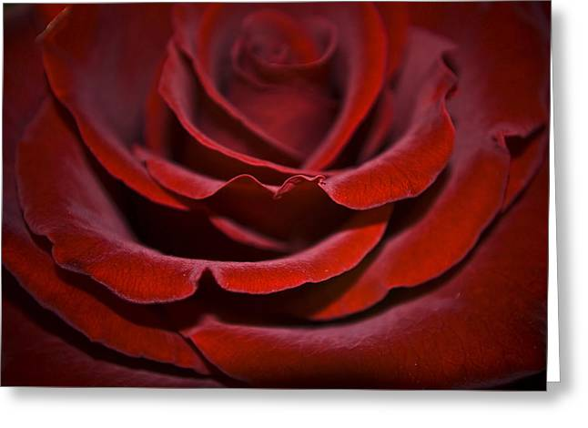 One Red Rose Greeting Card by Svetlana Sewell