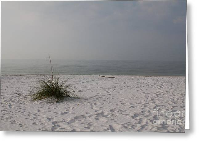 Beach Photos Greeting Cards - One Sea Oat  Greeting Card by Lowell Anderson