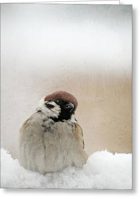 Sparrow Greeting Cards - One Sparrow In Snow Greeting Card by Heike Hultsch