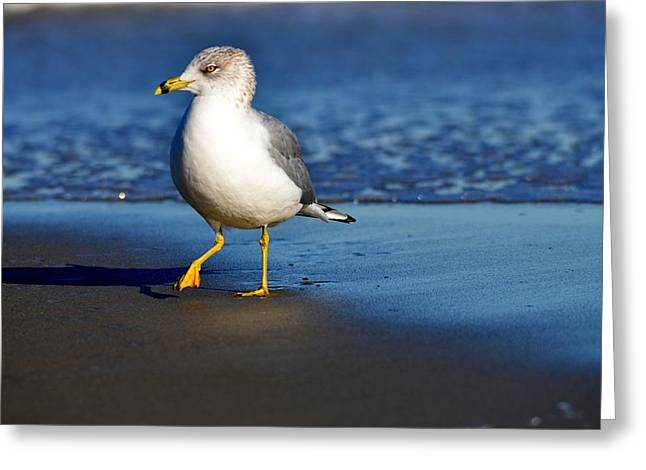 Flying Seagull Greeting Cards - One Step Easy Greeting Card by Russell Bonovitch