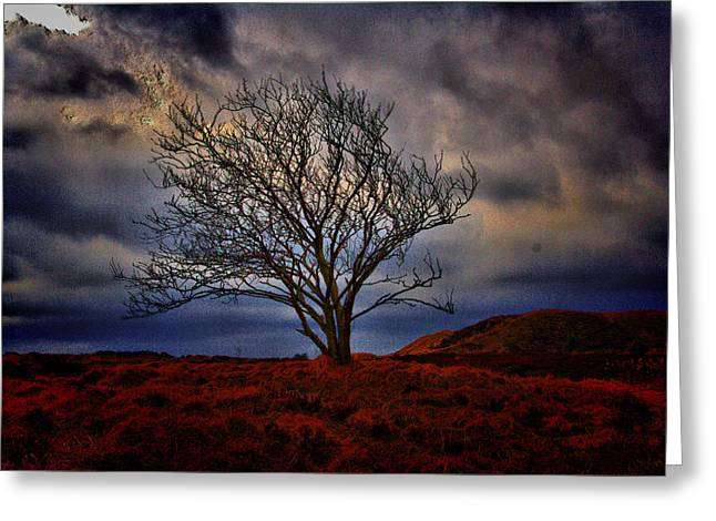 Hdr Landscape Greeting Cards - One tree hill Greeting Card by Thomas Pedersen