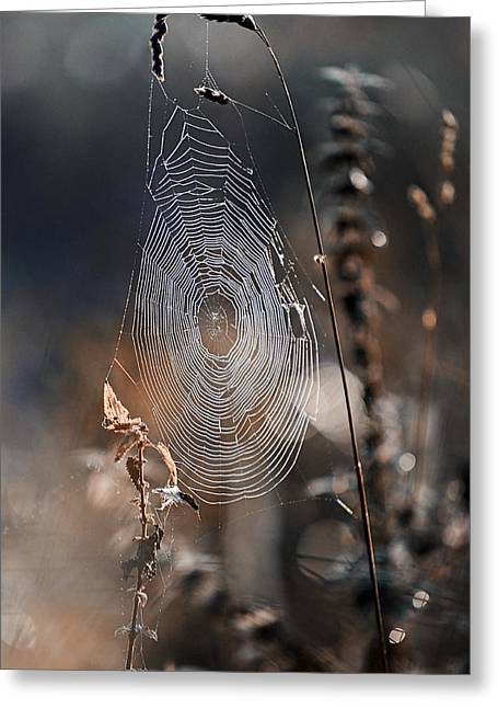 Spiderweb Greeting Cards - One Winter Morning Greeting Card by Jenny Rainbow