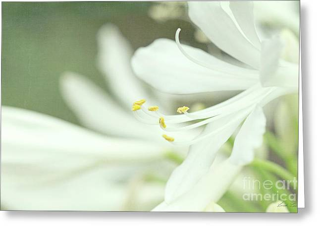 Only A Memory Greeting Card by Linda Lees