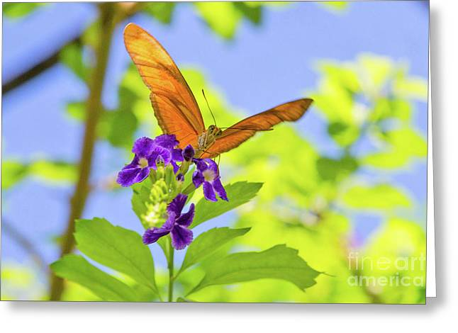 Only Have Eyes For You Greeting Card by A New Focus Photography