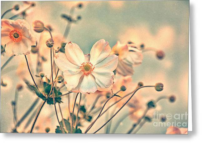 Fragrant Greeting Cards - oo Magic o2 Greeting Card by SK Pfphotography