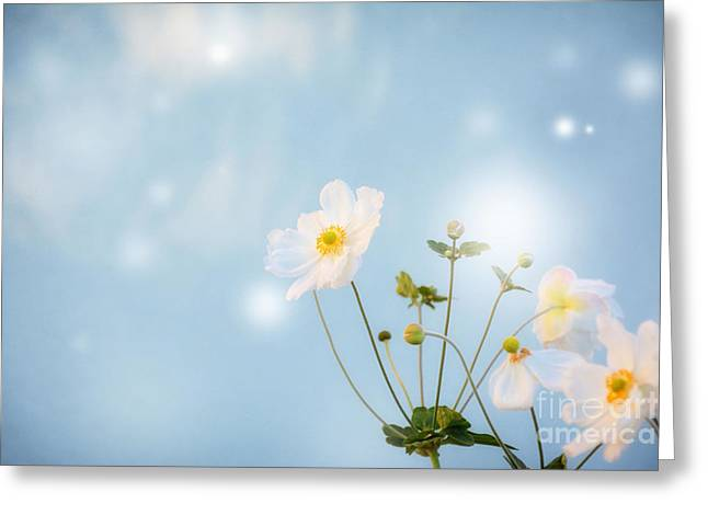 Fragrant Greeting Cards - oo Magic oo Greeting Card by SK Pfphotography