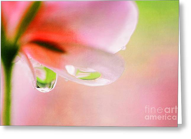 Fragrant Greeting Cards - oOo Drops oOo Greeting Card by SK Pfphotography