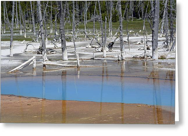 Opalescent Pool In Yellowstone National Park Greeting Card by Bruce Gourley
