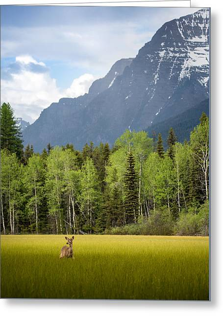 Open Spaces // Glacier National Park  Greeting Card by Nicholas Parker