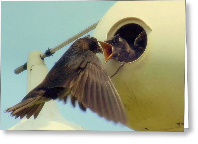 Feeding Birds Photographs Greeting Cards - Open Wide Greeting Card by Karen Wiles