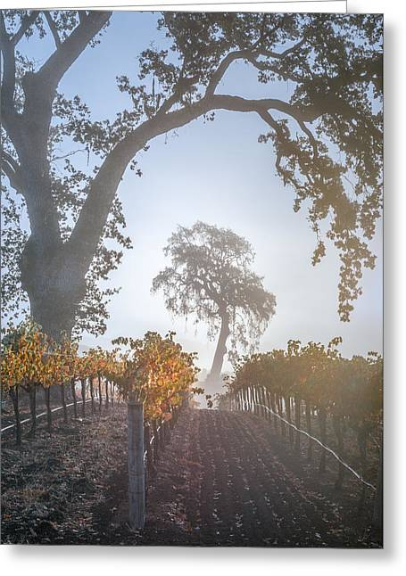 Opolo Vineyard Greeting Card by Joseph Smith