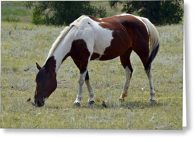 Wild Horses Greeting Cards - Opposites in Harmony Greeting Card by Ken Smith
