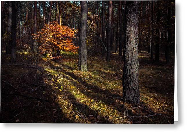Fall Grass Greeting Cards - Orange alien Greeting Card by Dmytro Korol